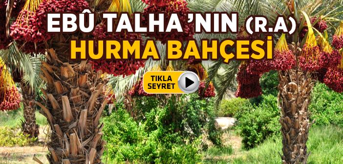 EBU TALHA'NIN HURMA BAHÇESİ