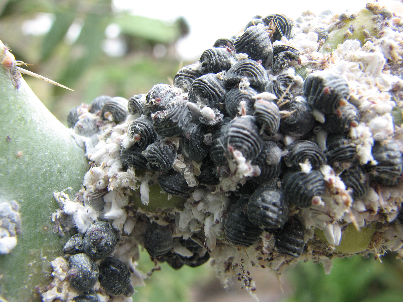 Bir rüyada bir hamamböceği görmek - Bunun nedeni nedir
