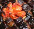 Fırında Patlıcan Kebabı Nasıl Yapılır?