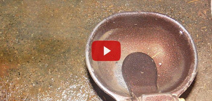 Köpeğin Su İçtiği Kap Kaç Defa Yıkanmalıdır?