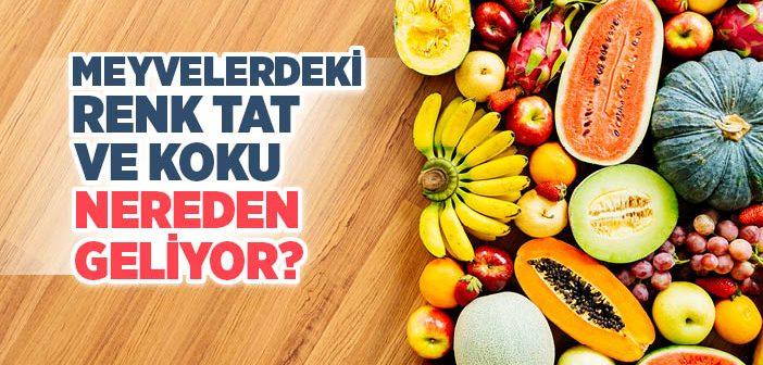 Meyvelerdeki Renk, Tad ve Koku Nereden Geliyor?