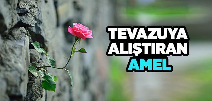 TEVAZUYA ALIŞTIRAN AMEL