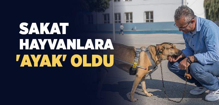 Mehmet Öğretmen Sakat Hayvanlara 'ayak' Oldu