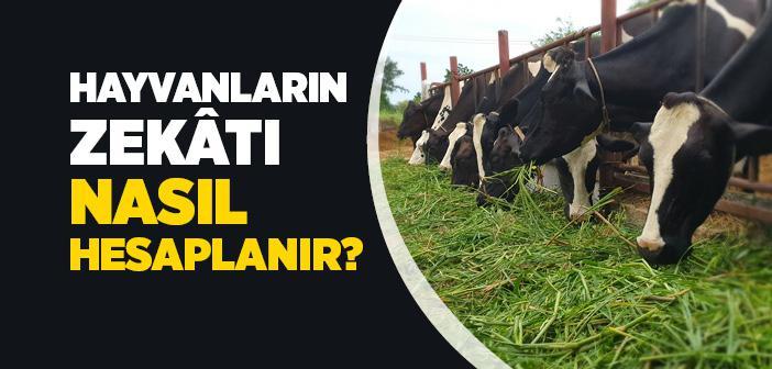 Hayvanların Zekâtı Nasıl Hesaplanır?