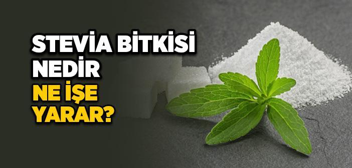 Stevia Nedir, Nasıl Kullanılır, Faydaları Nelerdir?