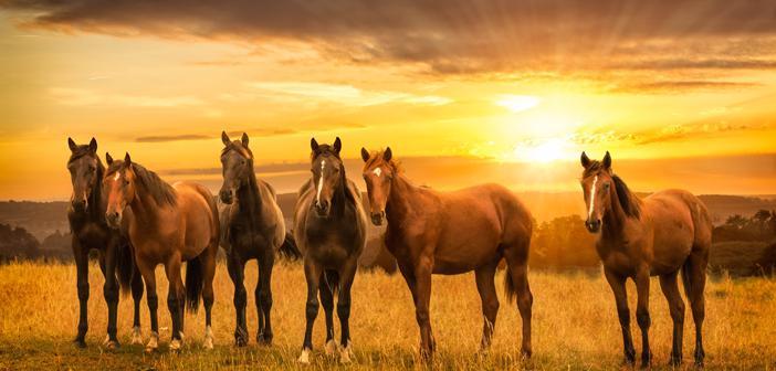 Atların Zekâtı