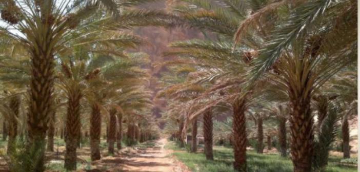 Peygamberimizin (s.a.v) Medine'de Karşılanması Kısaca