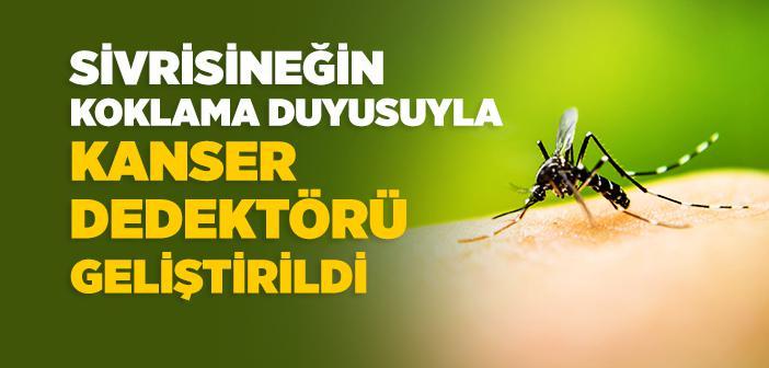 Sivrisineğin Koklama Duyusuyla Kanser Dedektörü Geliştirildi