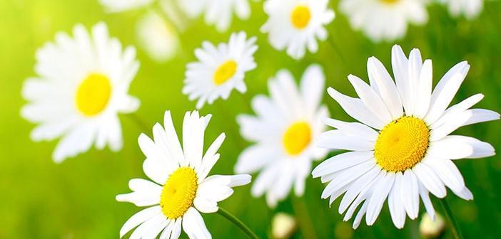 O'nun Gelmesi ile Azerbaycan Çiçek Açtı!