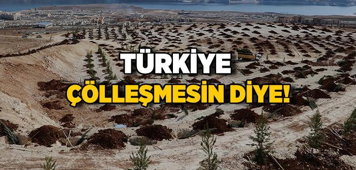 Türkiye'de Çölleşme ve Kuraklıkla Mücadele