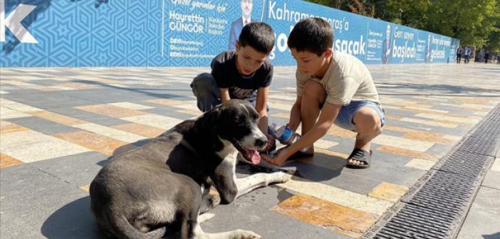 Çocuklardan Köpeğe Rahmet Eli